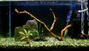 аквариумът на Николай Цветков - 16.08.2009г.