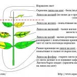 липси при водните растения