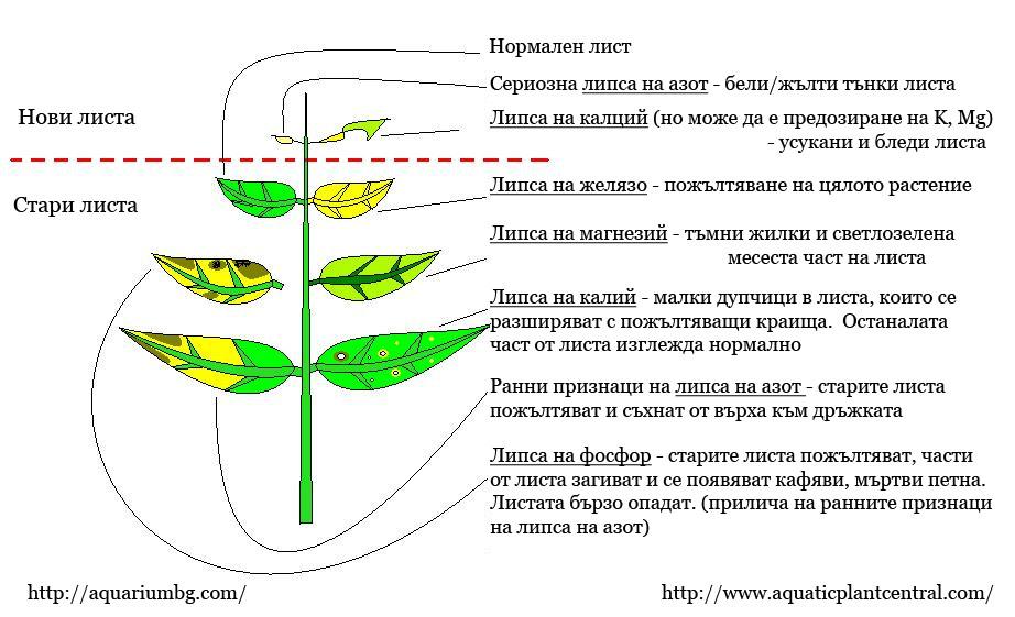 http://tsvetkov.be/wp-content/uploads/2009/09/lipsi-pri-rasteniata.jpg