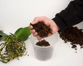 Насипете чисти и нови кори на дъното на саксията, оставяйки достатъчно свободно място.