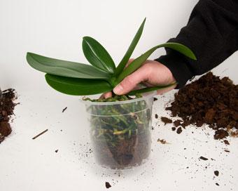 Сложете и орхидеята.